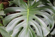 art ref: plants