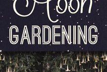 Midnight Garden / A moonlight garden for insomniacs