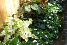 Aranżacje kwiatowe (ogród)