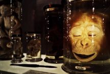 Bizarre Museums and Attractions