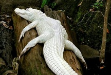 Albinoworld