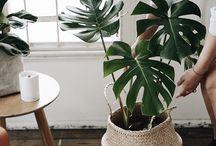 Plant instagram inspo