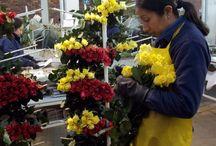 Ideas en flores