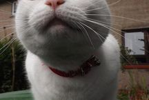 Catsos :)