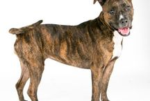 Adoptable Dogs at SF SPCA / Meet our dogs available for adoption at the Mission Campus and Pacific Heights Campus!