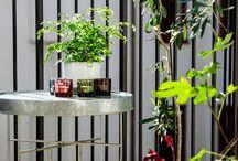 Conservatory ideas