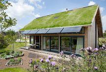 屋根上緑化