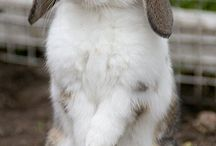 Cute Rabbits#2