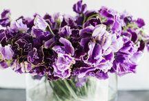 Flowers, flowers, flowers everywhere