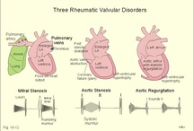 cl_1-Cardiovascular / by Hiris LIM