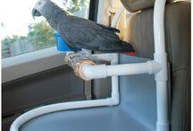A parrots life for me