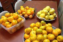 Mandarins & lemons taken up