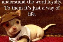 Chihuahua's my life