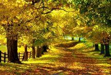 Nature...beautiful!