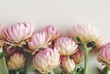 Flores son amores