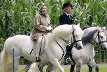 Horse of course / Kjendiser og hest