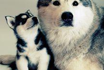 Hunde / Nååå.....