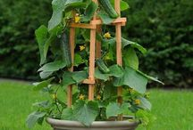 Foodie Garden