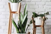 plants ideas
