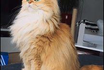 feline furbbies