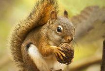 squirrels & chipmunks / egern & jordegern