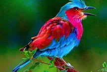 Digital Paintings of Birds