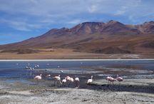 Bolivie / Découvrez notre voyage au Pérou - Bolivie : toutes les photos, itinéraires et bons plans . http://www.tripstoriz.com/tour/3-semaines-perou-bolivie-de-marie-fabien/