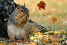 Campus Squirrels / by Truman State University