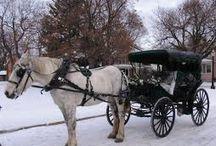 The Carriage Driver by mckkbirdbks