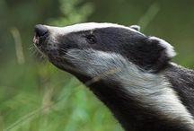 Wildlife News UK / Wildlife news articles from around the UK