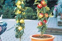 Ovoce v truhlících