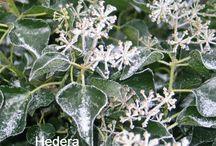 Beplantingsplan / Tuinen, heesters of struiken
