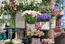 Floristic Places & Shop's