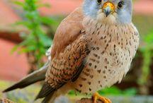 Birds :-) / by Mahima Rao