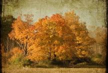 Autumn / by Nancy Kroeker Boothe