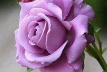 Ruusut ym