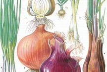 Botanical art=Ботанический рисунок
