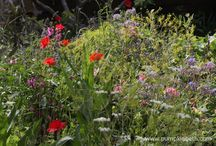 Wild and Naturalistic Planting / Beautiful plants and gardens, planted in a natural, sometimes overgrown, wild style.