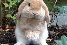 Fluffy guys / I have a little bunny so now I have a bunny Pinterest board
