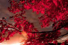 Älskar hösten