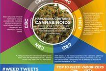 Infografiky / Infografiky / Ingraphics na téma konopí a cannabis