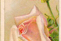 fiori da dipingere