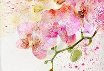 Orchids / by Phyllis Bleau
