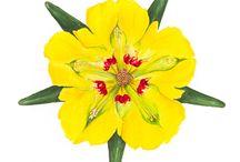 Ilustraciones flora y fauna Chilena