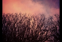 sky, trees... / i like seeing the sky, the trees without leaves,...