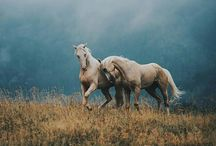 İkiz atlar
