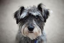 Listas de raças de cães / Várias listas de cachorros para ajudar na escolha de qual raça adotar.