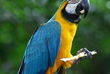 Vogels / Allemaal mooie vogels Van tropische vogels tot huisvogels