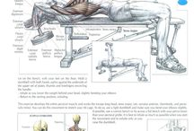 Chest/triceps / Split-routine system