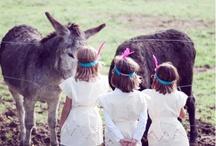 Donkeys / by Jamie Meares